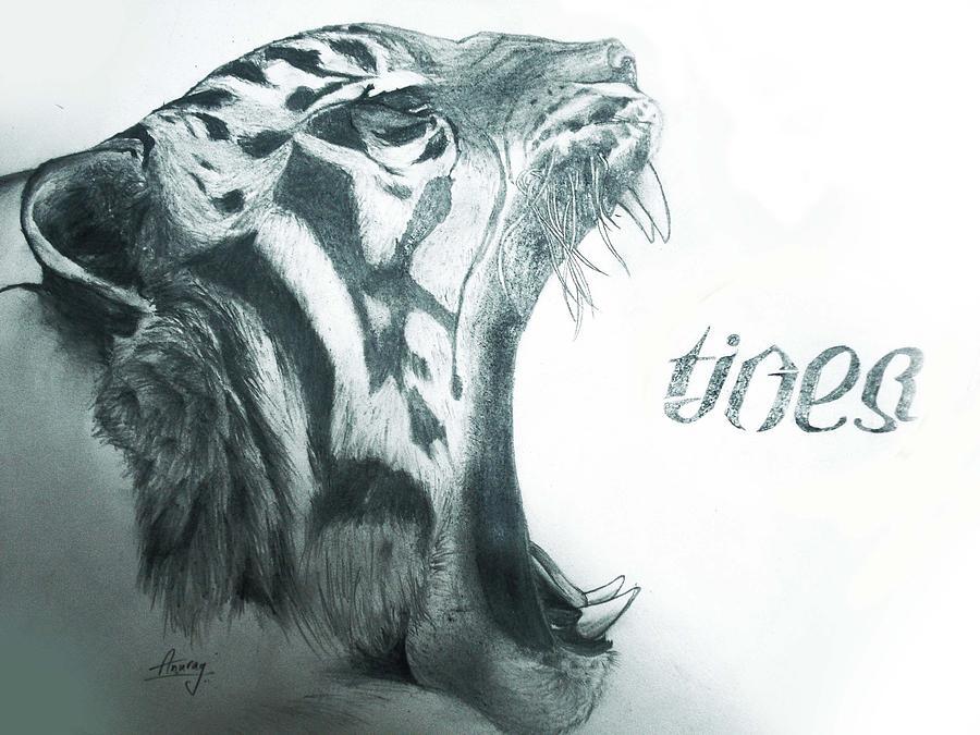 Save Tiger Drawing By Anurag Aggarwal