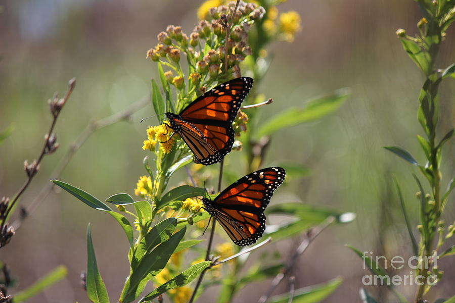 Butterfly Photograph - Savoring The Moment by Scenesational Photos