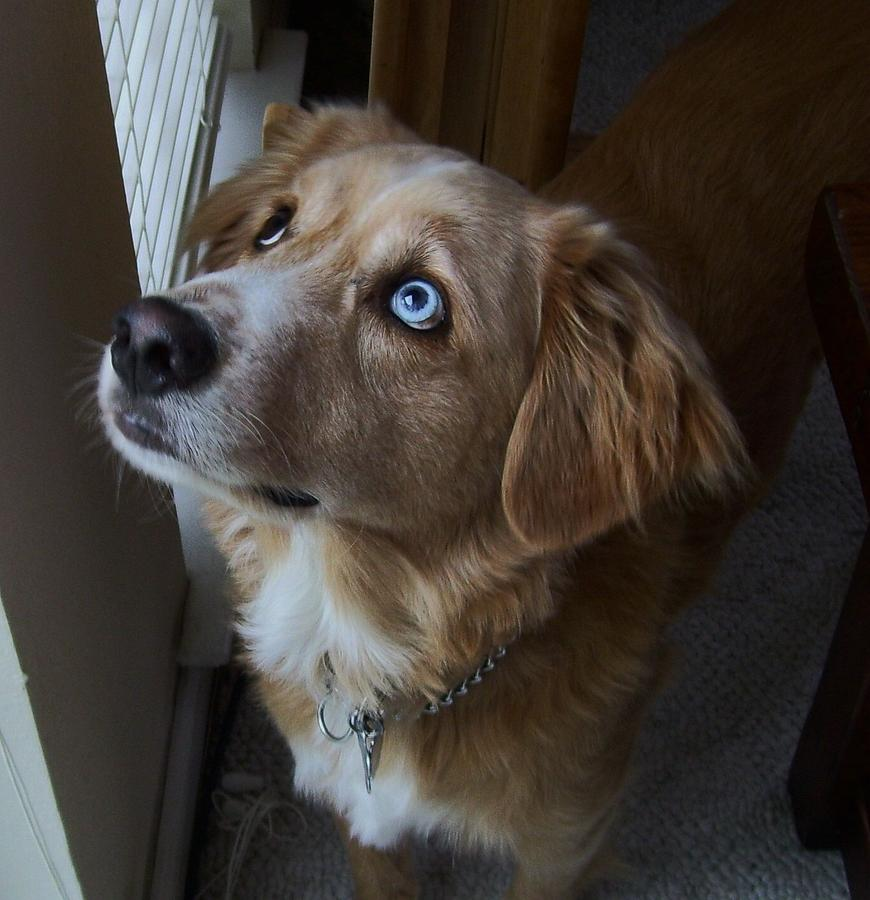 Dogs Digital Art - Saying A Prayer by Wide Awake Arts