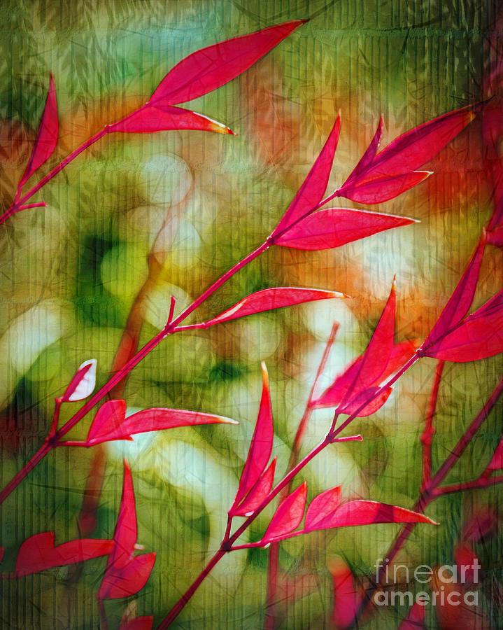 Scarlet Photograph - Scarlet by Judi Bagwell