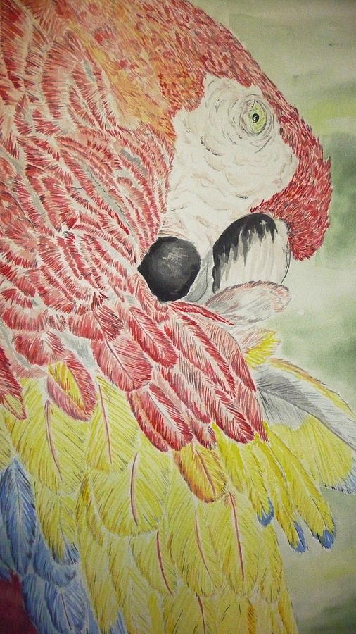 Nature Painting - Scarlet Macaw by Tim Forrester