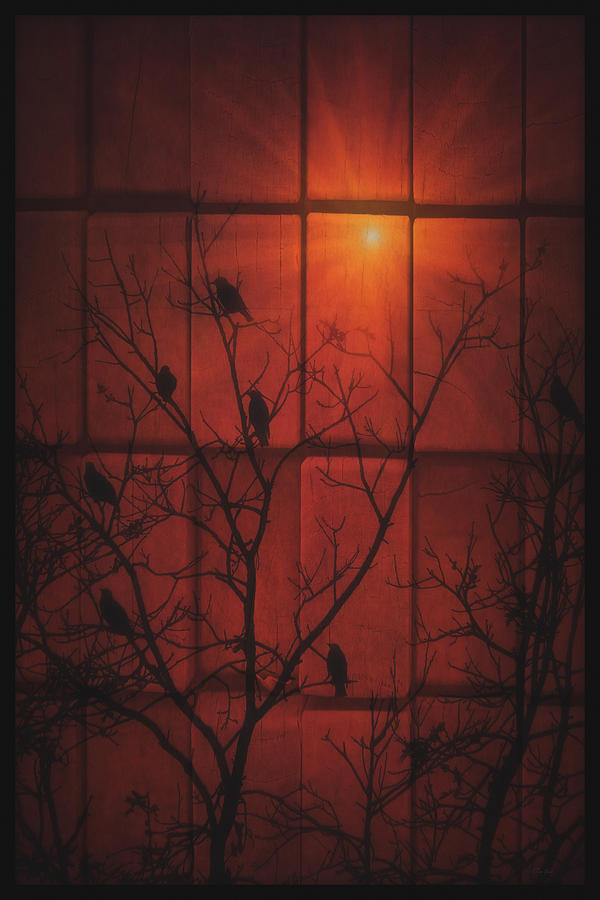 Sunset Photograph - Scarlet Silhouette by Tom York Images