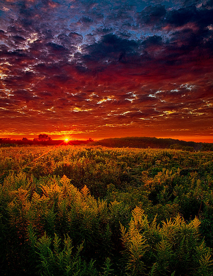 Scarlett Photograph - Scarlett by Phil Koch