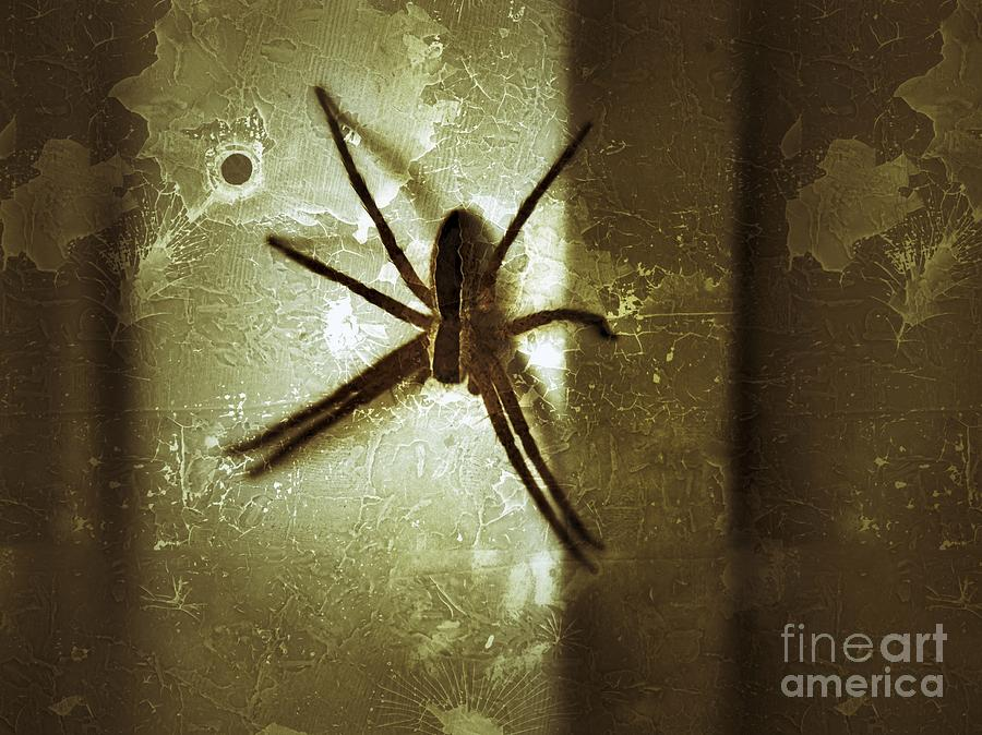 Spider Photograph - Scary Spider by Christy Bruna