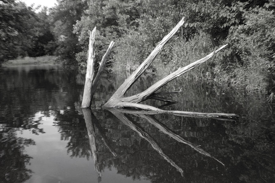 Scenes From The Kayak    Downed Trees Of The Ec River Back Waters Photograph by Artist Orange