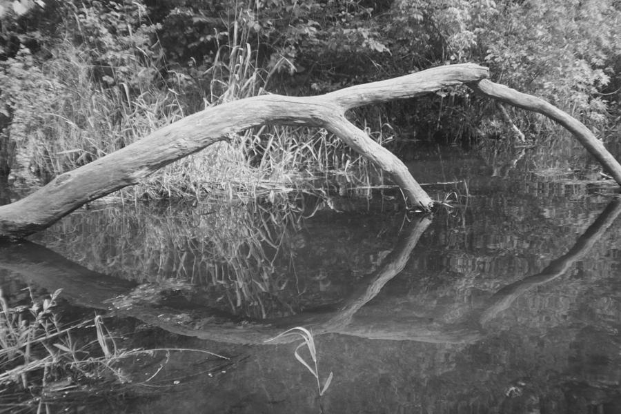 Downed Trees Photograph - Scenes From The Kayak.   Downed Trees Of The Ec River Back Waters Part 2 by Artist Orange