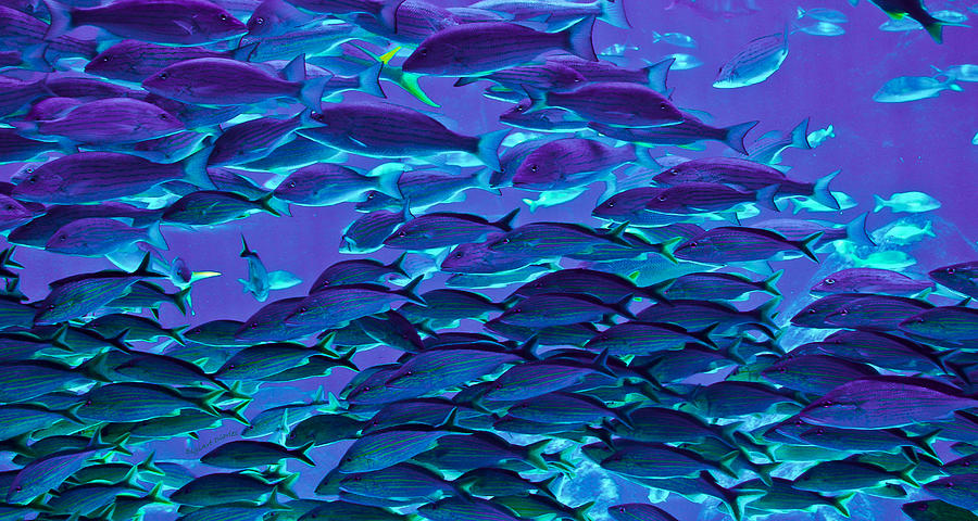 Fish Photograph - School Daze by DigiArt Diaries by Vicky B Fuller