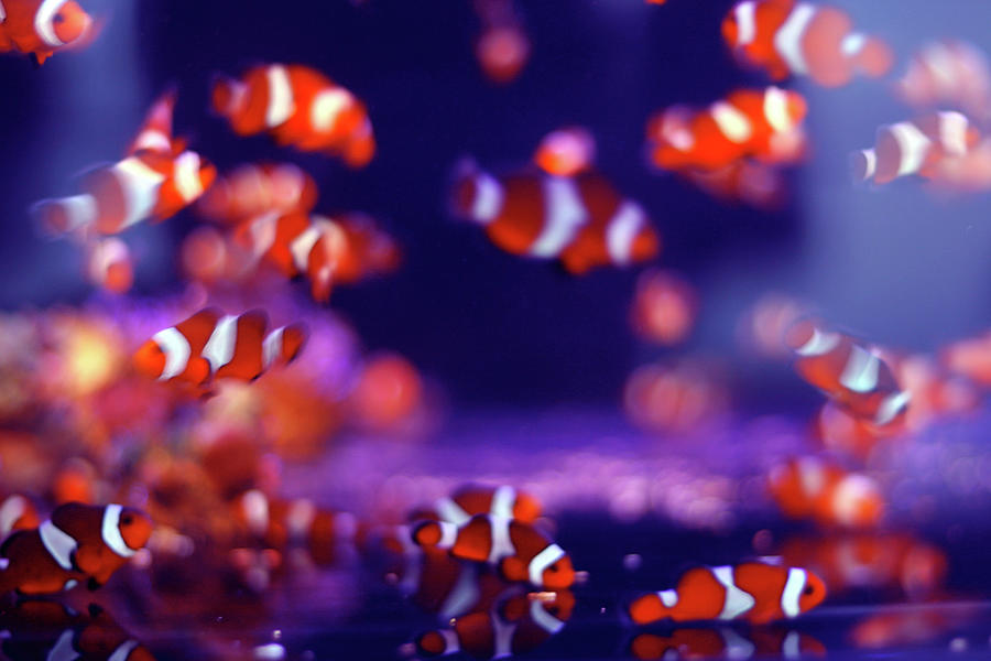 Horizontal Photograph - School Of Fish by Yuki Crawford