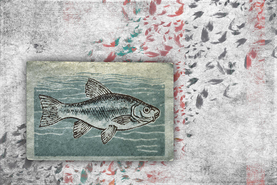 Fish Photograph - Schools 2 by Carol Leigh