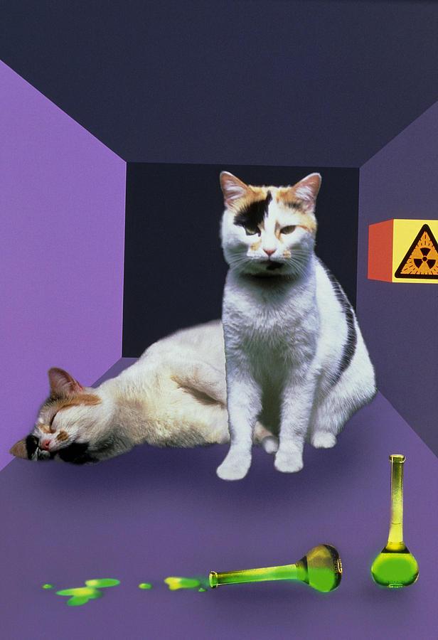 Artwork Photograph - Schrodingers Cat Experiment by Mehau Kulyk
