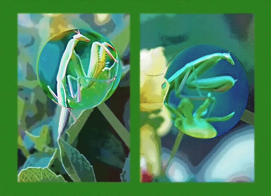 Praying Mantis Photograph - Science Class Diptych - Praying Mantis by Steve Ohlsen