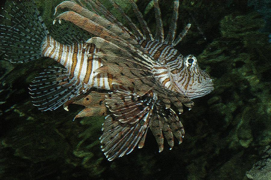Scorpion Fish Photograph - Scorpion by Greg Kopriva