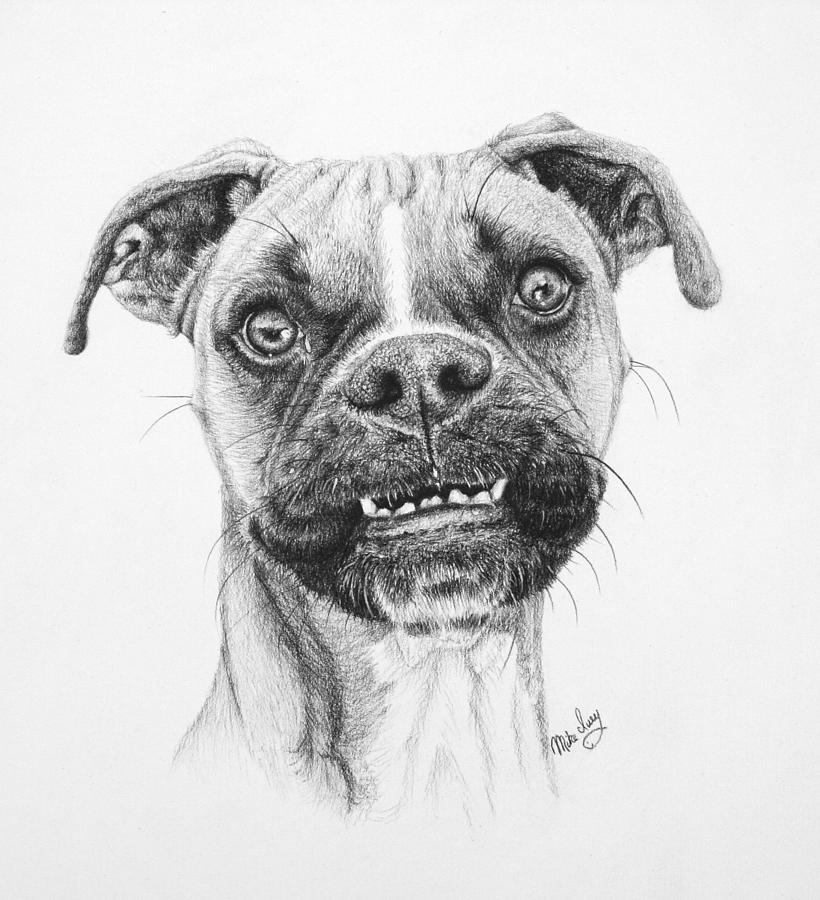 Dog Drawing - Scout by Mike Ivey