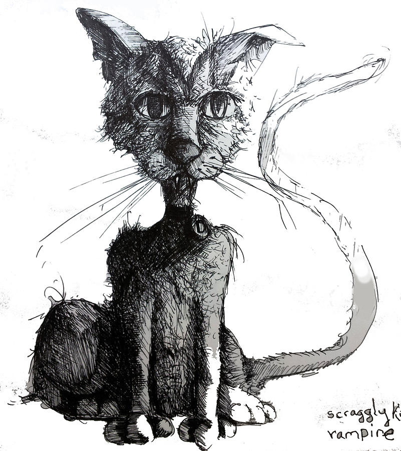 Cats Drawing - Scraggly Vampire Kiittie by Neal Cormier