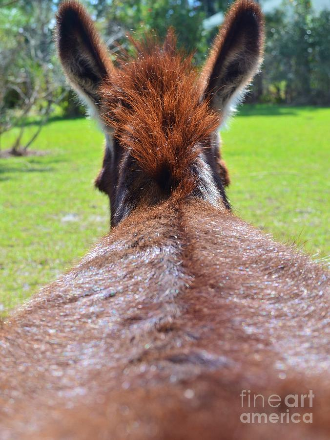 Donkey Photograph - Scratch My Ass by Lynda Dawson-Youngclaus