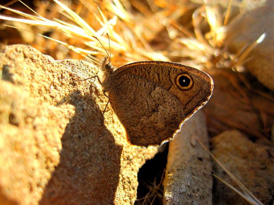 Moth Photograph - Scruffy by Catherine Natalia  Roche