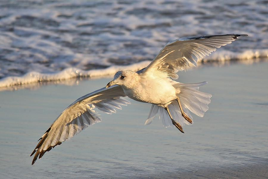 Sea Gull Photograph - Sea Gull At Twilight by Paulette Thomas