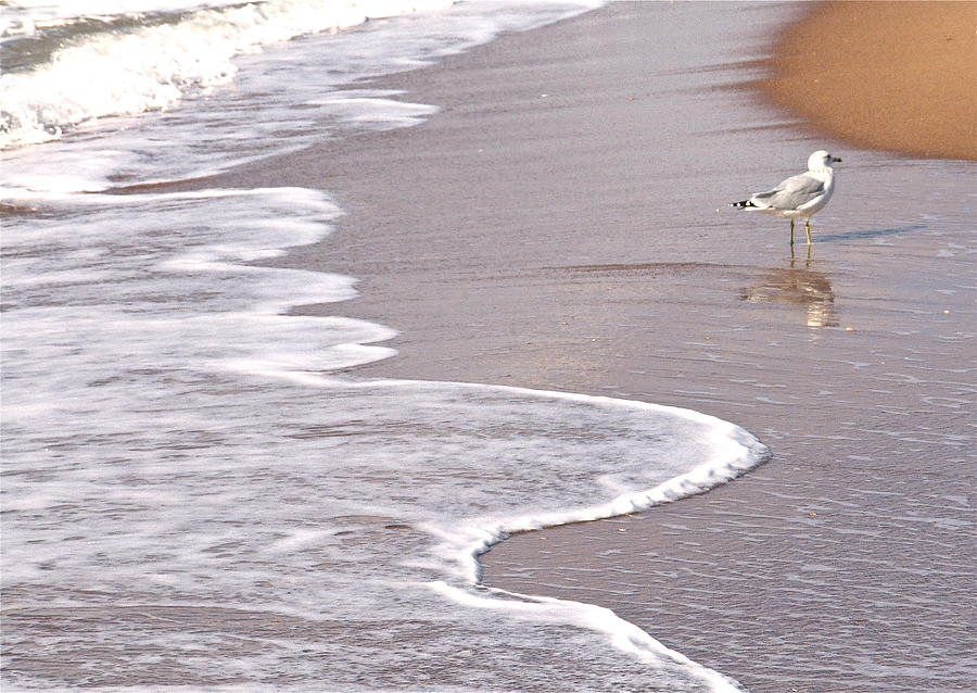 Sea Gull Walking On The Beach On A Hot Summer Day Photograph - Sea Gull Reflection by Cindy Lee Longhini