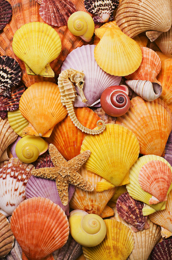 Shell Photograph - Sea Horse Starfish And Seashells  by Garry Gay