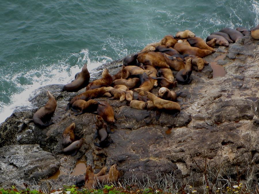 Kathy Long Photograph - Sea Lions 3 by Kathy Long