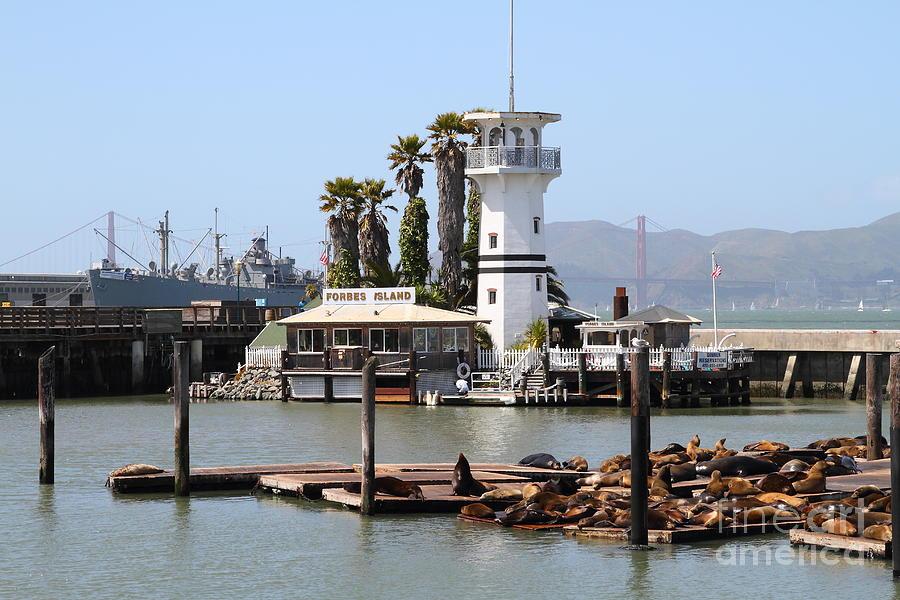 San Francisco Photograph - Sea Lions At Pier 39 San Francisco California . 7d14294 by Wingsdomain Art and Photography