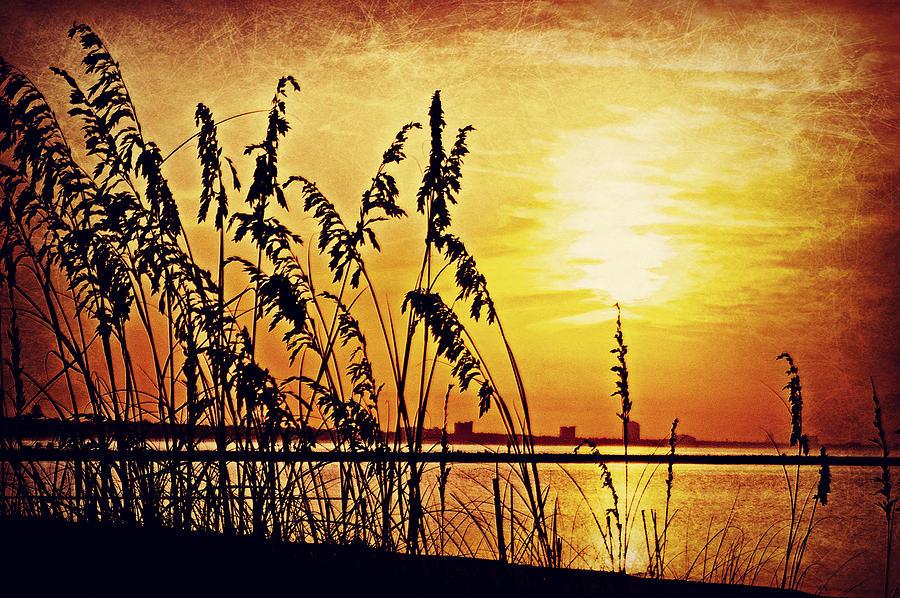 Sunrise Photograph - Sea Oat Sunrise by Brian Wright