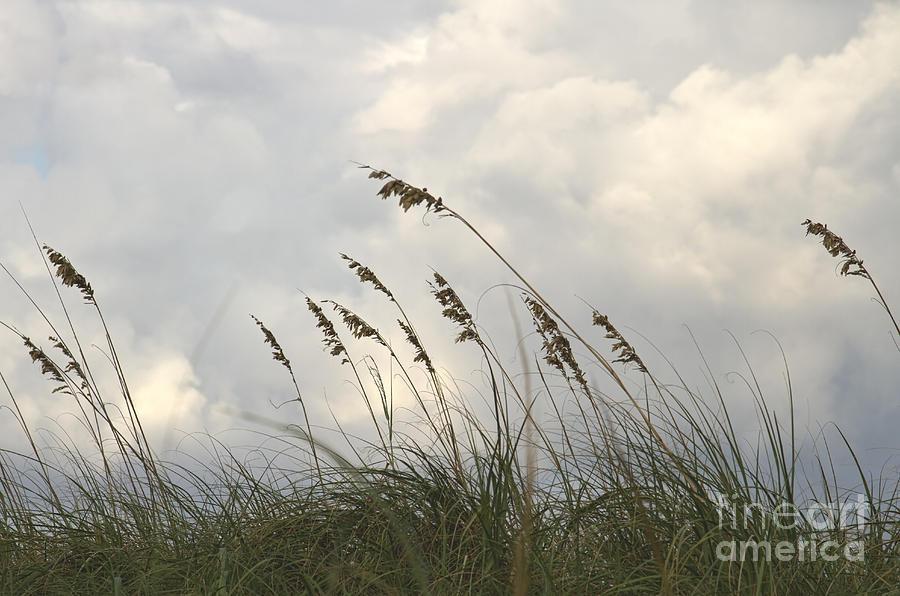 Sea Oats Photograph - Sea Oats by Blink Images