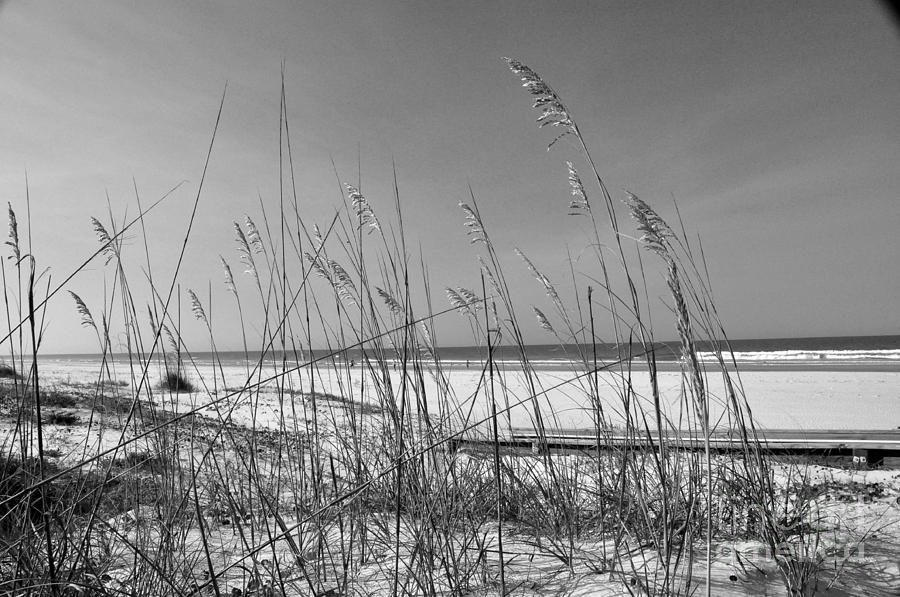 Sea Oats Photograph - Sea Oats by John Black