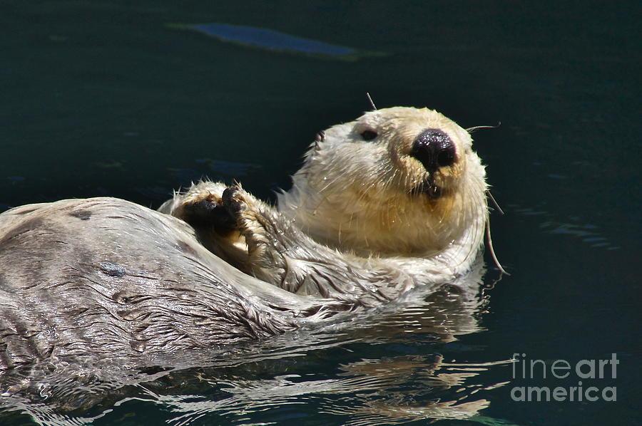 Sean Griffin Photograph - Sea Otter by Sean Griffin