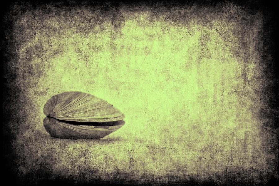 Shell Photograph - Sea Saw Shell by Dmitriy Mirochnik