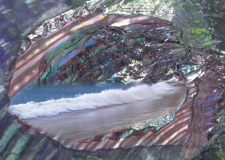 Sea Photograph - Sea Shell Card by John Neville Cohen