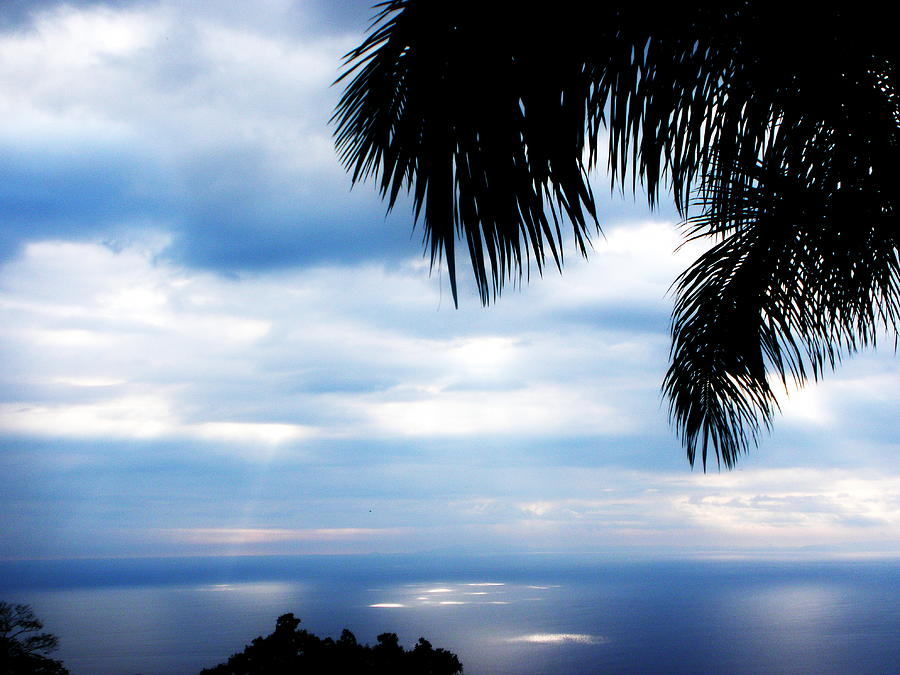 Palm Tree Photograph - Sea Sky And Palm Tree by Rosvin Des Bouillons