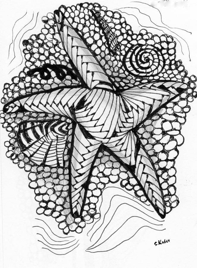 Pen And Ink Drawing - Sea Star by Susan Kubes