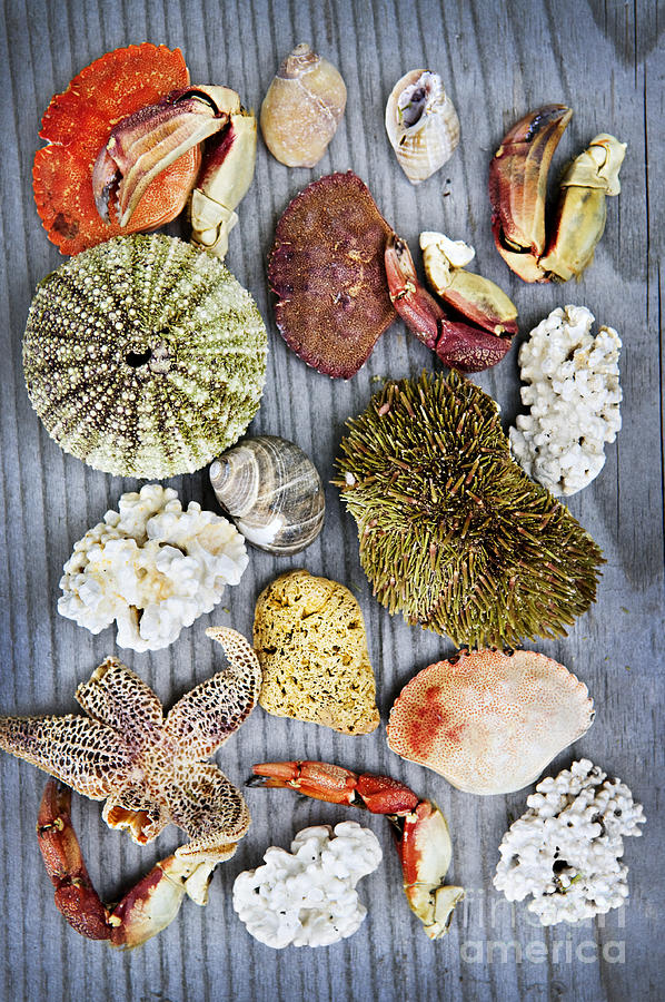 Shells Photograph - Sea Treasures by Elena Elisseeva