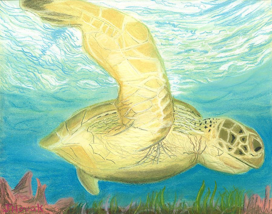 Sea Turtle Drawing by Jackie Novak