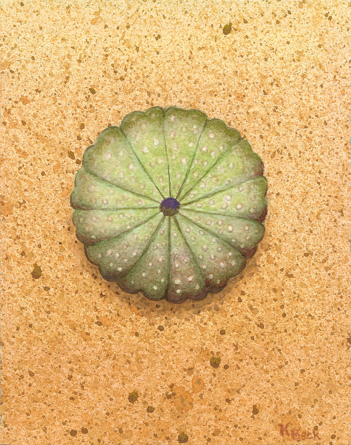 Print Painting - Sea Urchin by Katherine Young-Beck