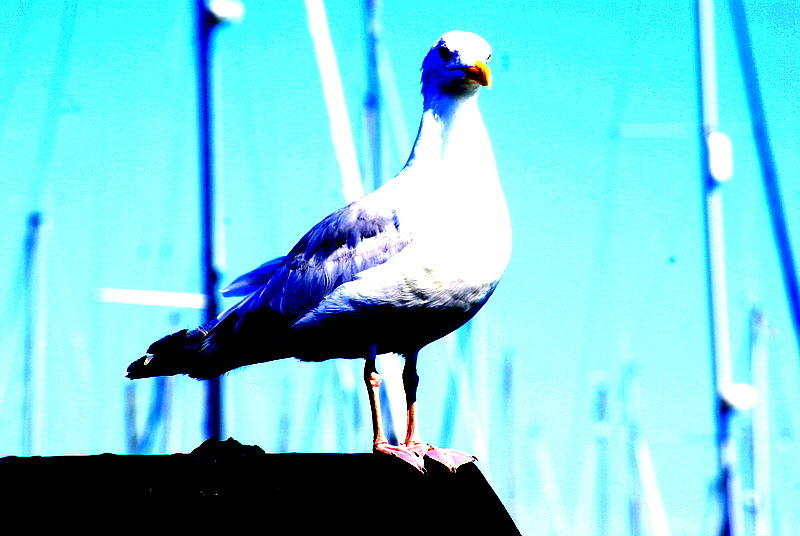 Seagull Photograph - Seagull  by Amanda Pillet