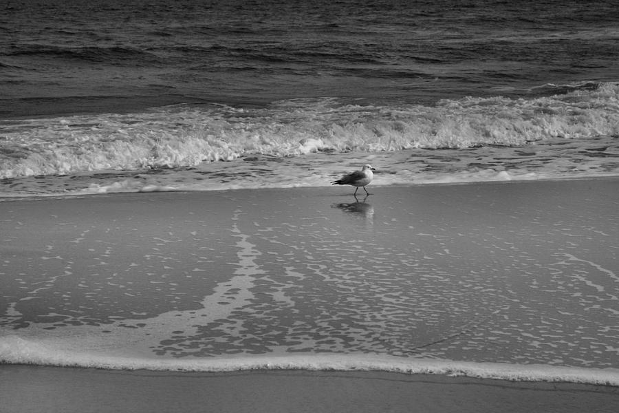 Bird Photograph - Seagull And Surf by Steven Ainsworth