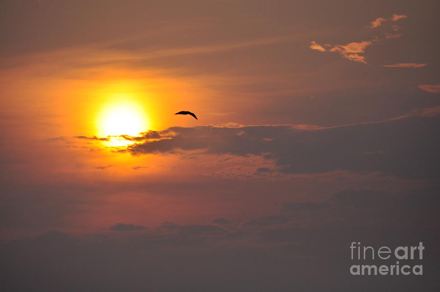 Sunset Photograph - Seagull At Sunset by Fred Fishkin