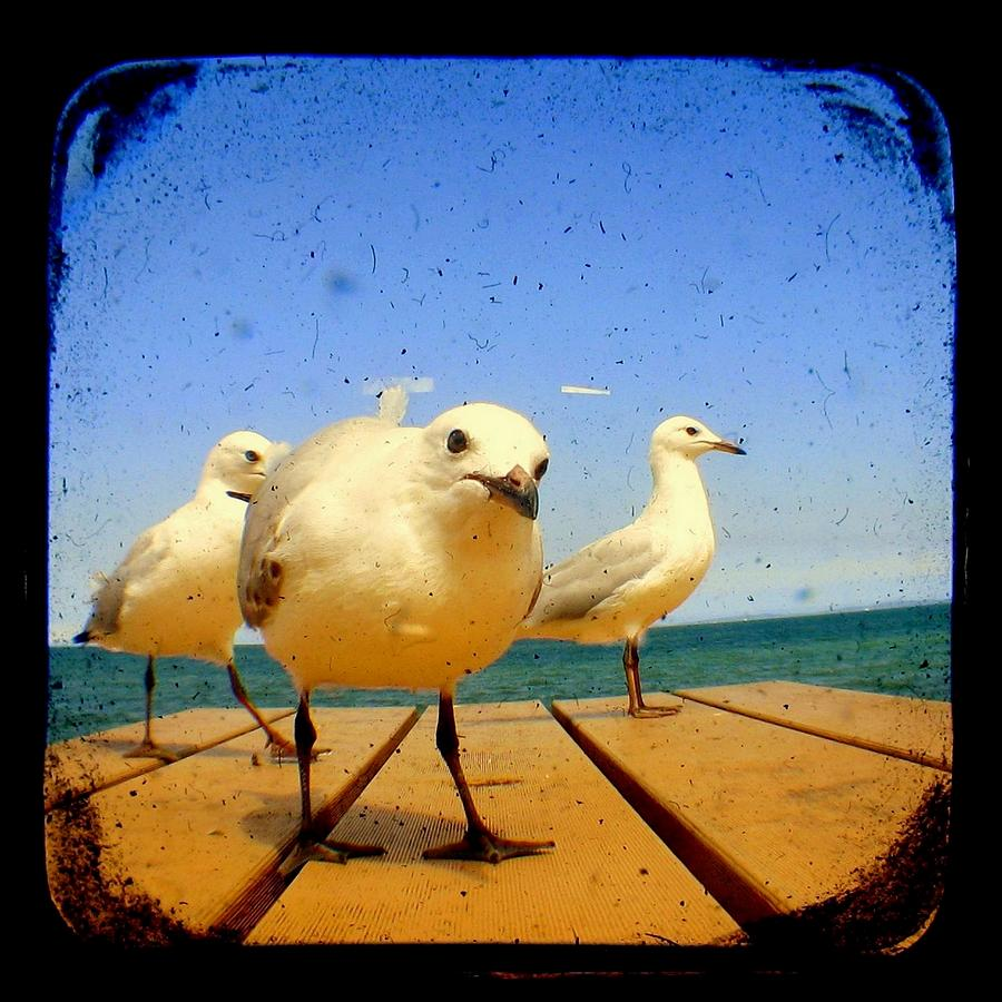 Seagull Photograph - Seagull At The Beach - Ttv  by Tracy Milchick