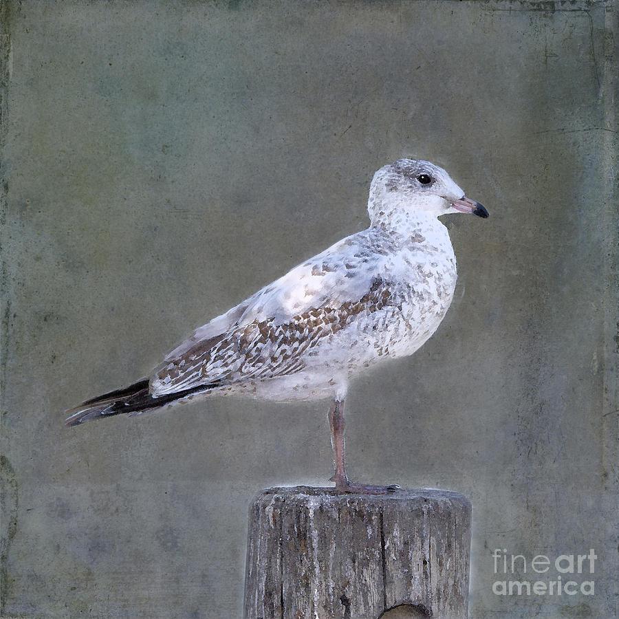 Seagull Photograph - Seagull by Betty LaRue