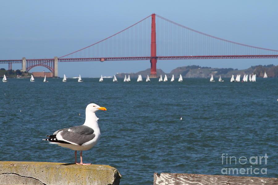 San Francisco Photograph - Seagull Enjoying The Sailboats On The San Francisco Bay . 7d14041 by Wingsdomain Art and Photography
