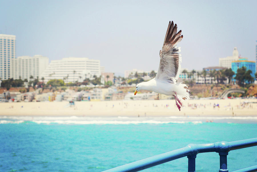 Horizontal Photograph - Seagull Flying by Libertad Leal Photography
