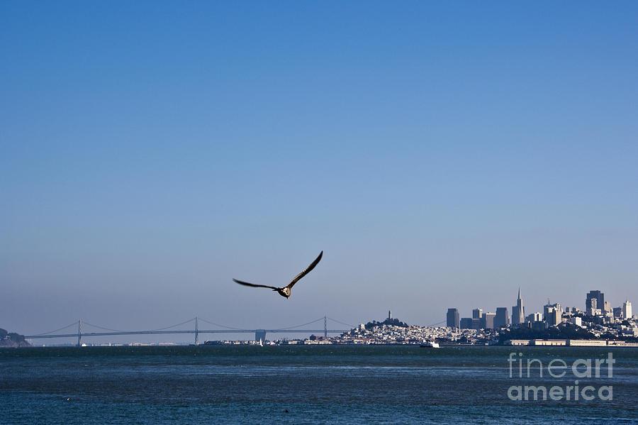 1 Photograph - Seagull Flying Over San Francisco Bay by David Buffington