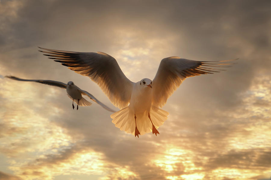 Horizontal Photograph - Seagull by GilG Photographie