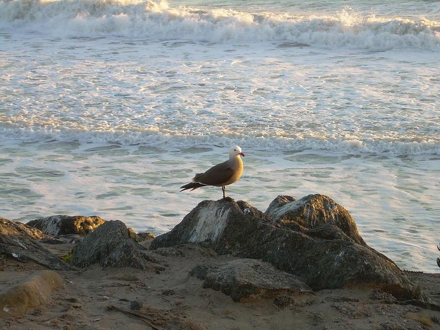Seagull I by Joseph Litzinger