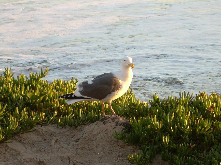 Seagull II by Joseph Litzinger