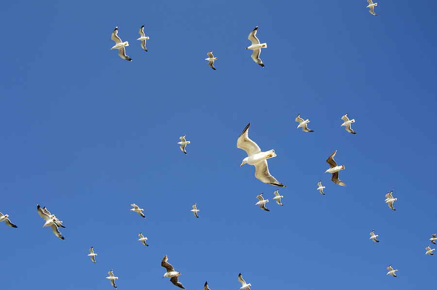 Seagull Photograph - Seagull by Johnny Greig