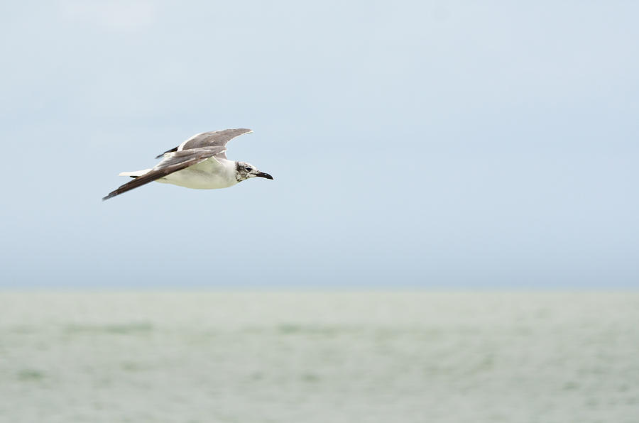 Seagull Photograph - Seagull by Mike Rivera