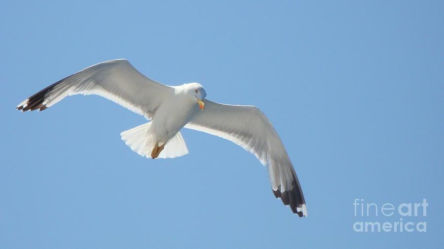 Sea Photograph - Seagull On The Sky by Olga R